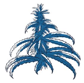 Planta Maconha