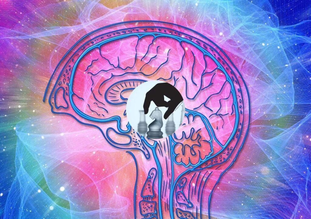 5 Estímulos Cognitivos
